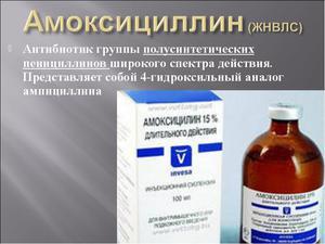 свойства лекарства амоксициллин